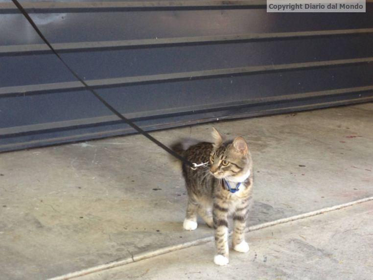 Bailey: storia di un gatto che si crede un cane e si
