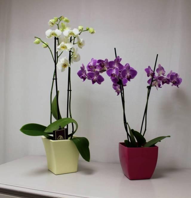www.giardinaggio.com