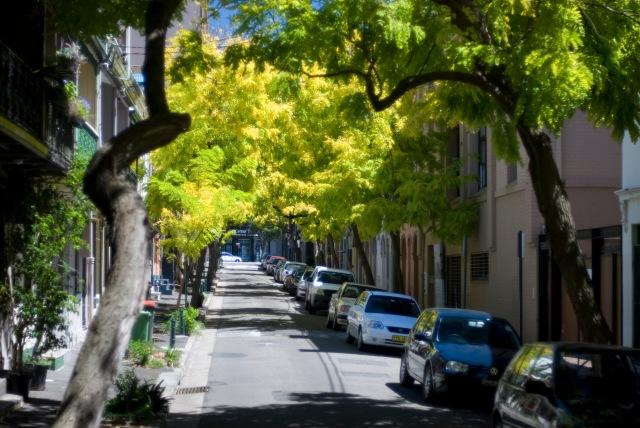 foto presa dal web