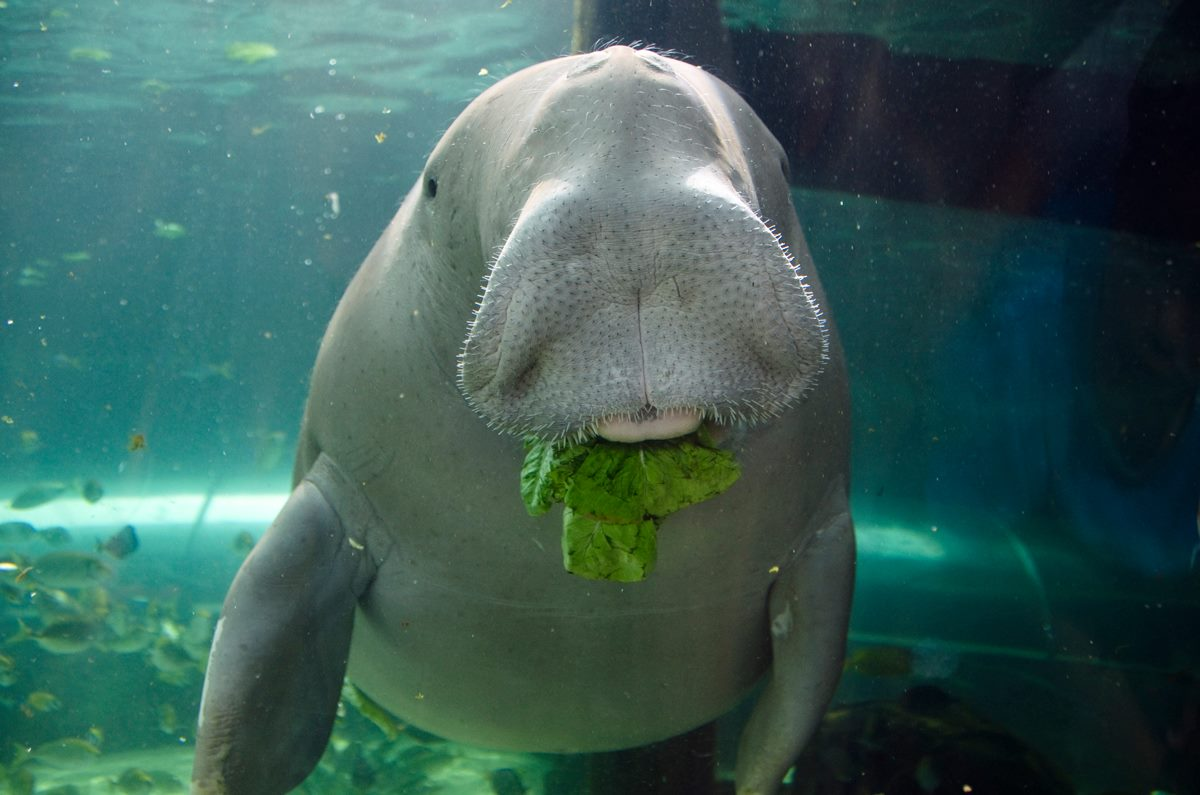 Photo courtesy of Sea Life Sydney Aquarium FB page